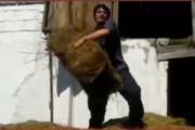 Ot bağlamasıyla məşqlə çempion idmançımız - Video